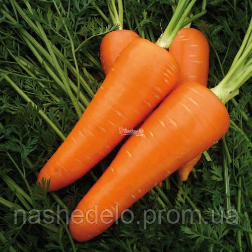Мирафлорес F1 100 000 сем. 2 -2,2  морковь  Clause