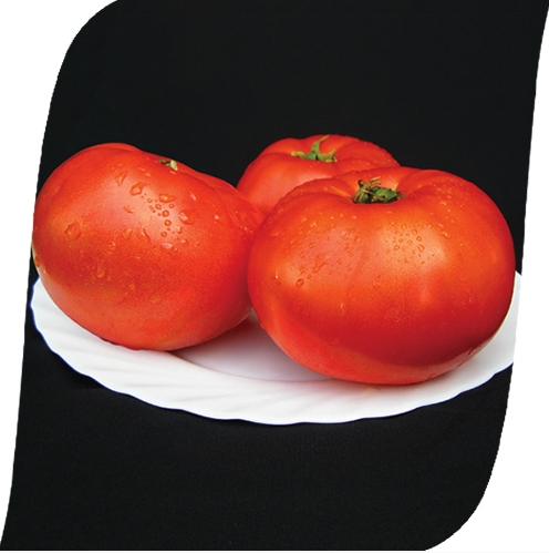 Мирсини F1 - семена томата, Seminis 1 000 семян