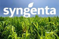 Семена подсолнечника Syngenta