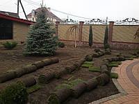 Создание посевных и рулонных газонов