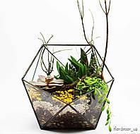 Флорариум: Basket maxi, фото 1