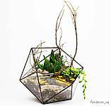 Флораріум: Basket maxi, фото 6
