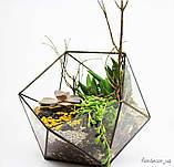 Флораріум: Basket maxi, фото 5