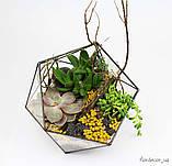 Флораріум: Basket maxi, фото 3