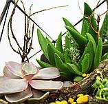 Флораріум: Basket maxi, фото 2