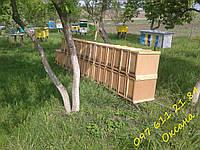 Бджолосім'ї бджолопакети Пчелосемьи пчелопакеты Українська степова