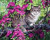 VP883. Набор-раскраска по номерам Кот и цветущее дерево