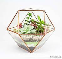 Флорариум: Super box mini, фото 1