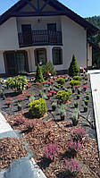 Посадка растений, деревьев и кустарников