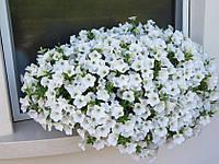 Рассада Сурфиния Petunia Table White