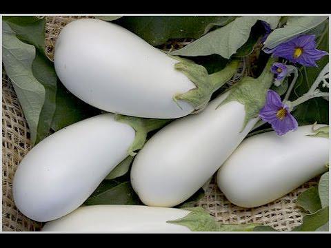 Семена баклажана белый 1 кг , Польша