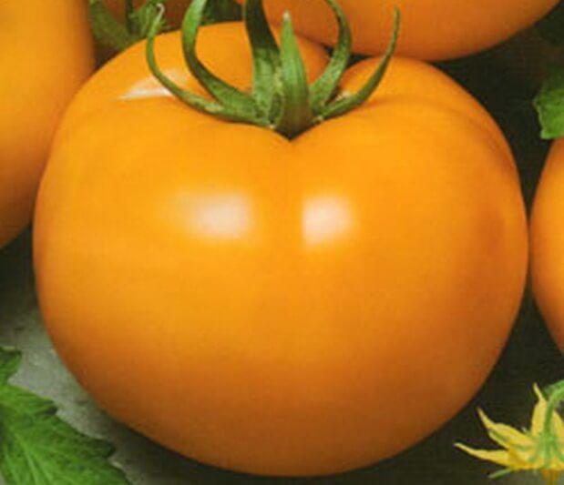 Насіння томату золота королева 1 кг , Польща