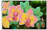 Схема для вышивки бисером Орхидея великолепная