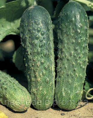Семена огурца Аякс F1 500 семян Nunhems