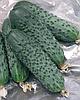 Семена огурца Сатина F1 1000 семян Nunhems