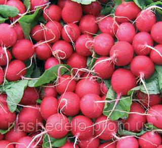 Семена редиса Дабел F1 10000 семян Nunhems