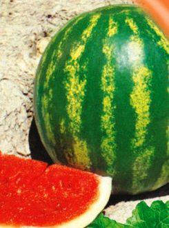 Семена арбуза Астраханский, фото 2