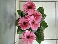 Горшечное растение Гербера розовая