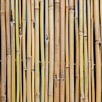 Бамбуковый забор 1000х6000, фото 1
