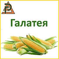 Гибрид кукурузы Галатея (среднеранний, ФАО 260) - Рост Агро 2017 г.у.