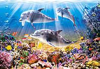 Пазлы Подводный мир, 500 элементов Castorland В-51014