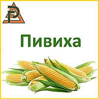 Гибрид кукурузы Пивиха (ФАО 180) 2017
