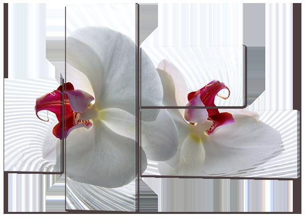 "Модульная картина ""Две орхидеи"""