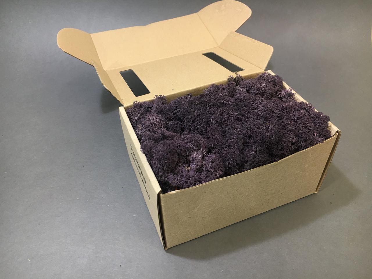 Стабилизированный мох в коробке (Aubergine)