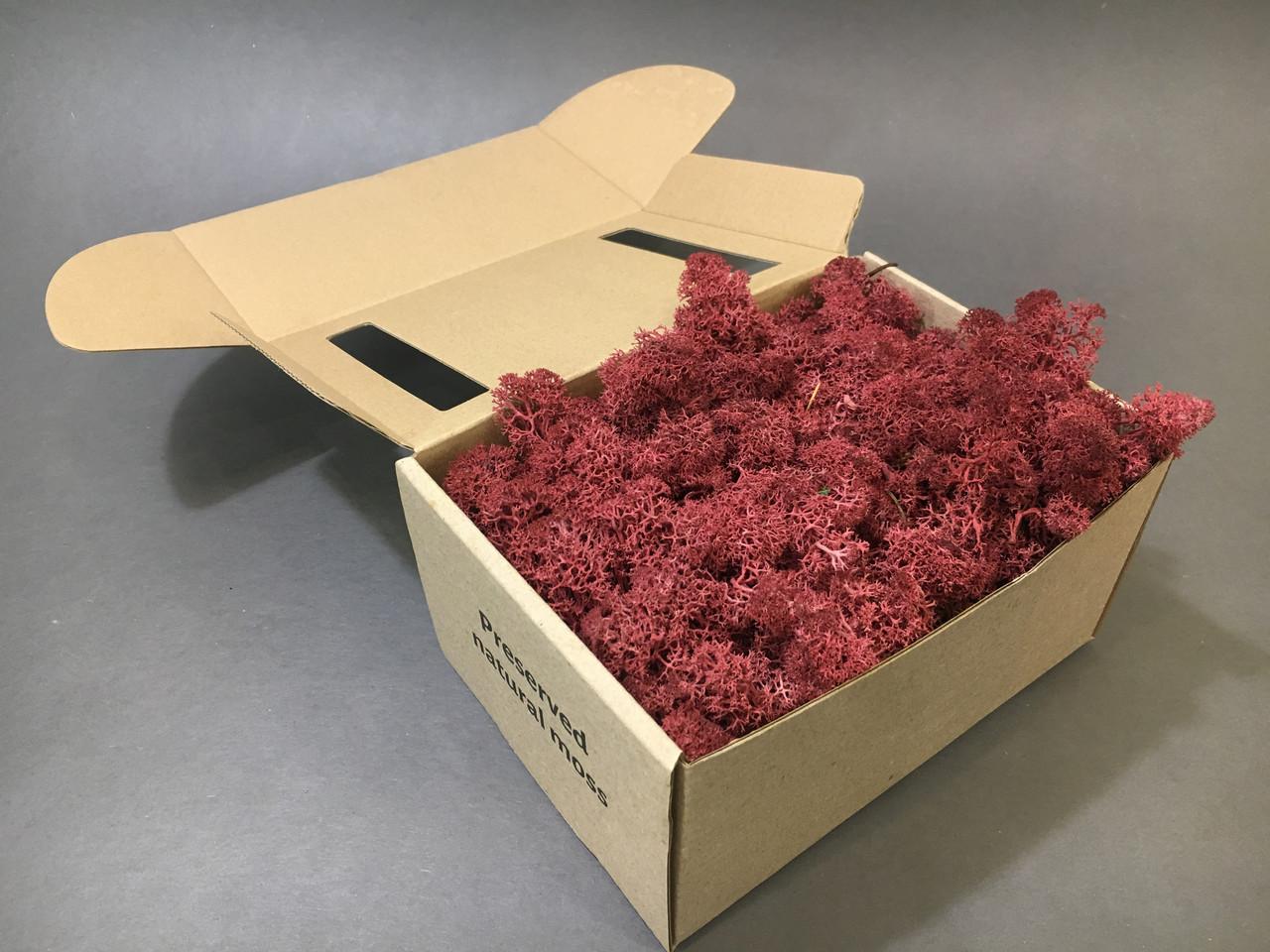 Стабилизированный мох в коробке (Burgundy)