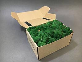 Стабилизированный мох в коробке (Grass Green)