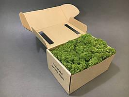 Стабилизированный мох в коробке (Medium Green)