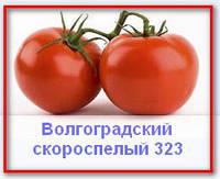 Семена овощей.Томат Волгоградский Скороспелый 323
