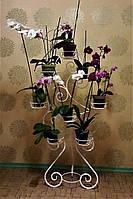 Бегония-2, подставка для цветов на 16 чаш, фото 1