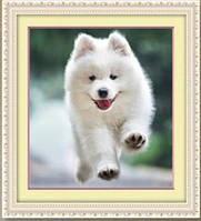 "Алмазная вышивка ""Белая собачка"" (набор для творчества)"