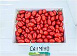 Семена томата Санмино F1, 1000 семян, фото 4