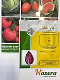 Семена капусты Тинти F1 / Тinti F1, 2500 семян, фото 2