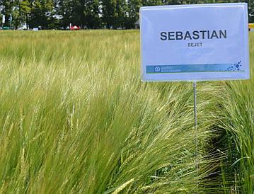 Семена ярого Ячменя / Насіння ярого ячменю Себастьян  (СН-1) 1 репродукція
