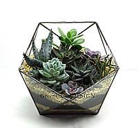 """Флорариум """"Икосаэдр"""" с живыми растениями, ширина -24 см, высота -21 см."""
