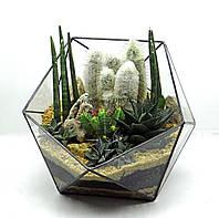 """Флорариум """"Икосаэдр"""" с кактусами-оригинальный подарок!"""