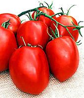 Яки F1 - семена томата, Seminis 1 000 семян