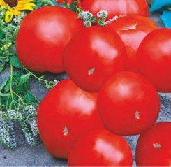 Семена томатов Иришка, фото 2