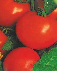 Семена томатов Кременчугский, фото 2