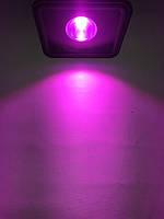 Светодиодный фитопрожектор PREMIUM SL-50GF 50W IP65 (full spectrum led) Код.59209