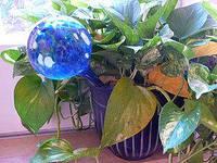 Автополив для комнатных растений Aqua Globes