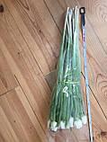 Тюльпаны к 8 марта ассортимент, фото 9