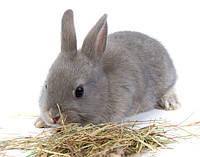 Чем болеют декоративные кролики?