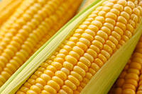 Семена кукурузы НК Нериса. Упаковка 1 п.е. Производитель Syngenta