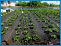 Агроволокно Чёрное  55(1,6×55) ТМ Free Agro