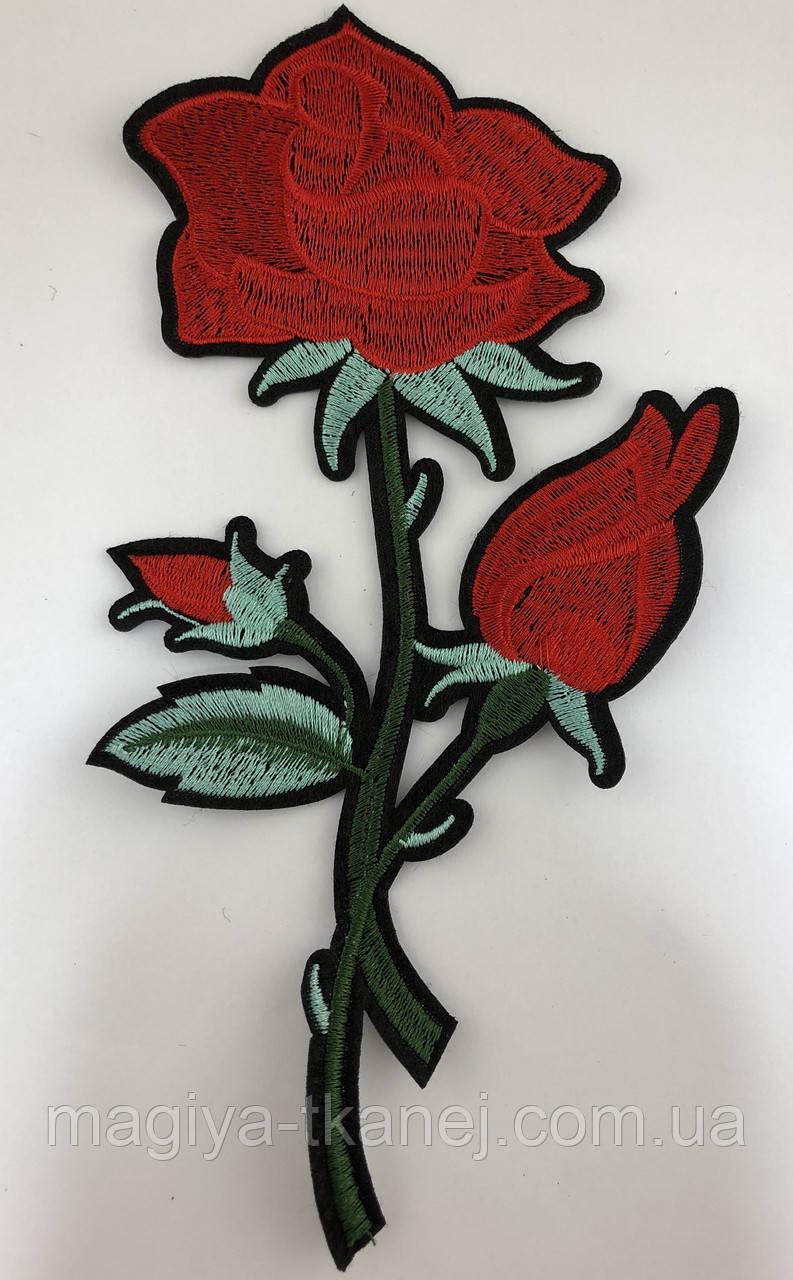 Роза 06