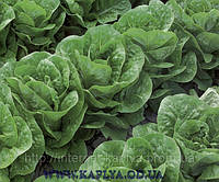 Семена салата Клаудиус 5000сем.Рийк цваан.
